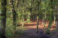 A Woodland Realm (Osgoldcross Photography) Tags: autumn trees light shadow sun sunlight leaves woodland landscape woods nikon wildlife branches naturalhistory foliage bark naturereserve stems trunks dappled hdr westyorkshire 3xp howellwood handheldhdr southkirkby nikond5100