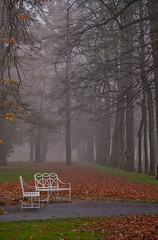 White benches (koen_1234) Tags: park trees mist netherlands leaves fog bench nederland bank deventer overijssel ochtend bankje bladeren deworp