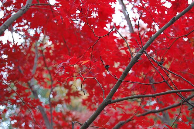 Nov11-R-leaffall_0634