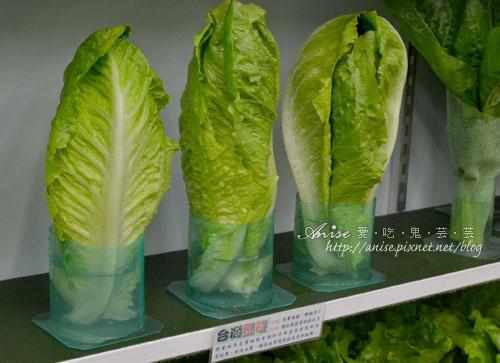 辣滷哇蔬菜森林012.jpg