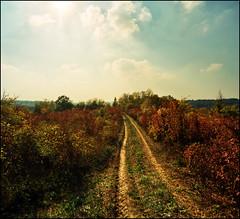 Trails (Katarina 2353) Tags: film photography nikon image path serbia tracks ova srbija katarinastefanovic katarina2353