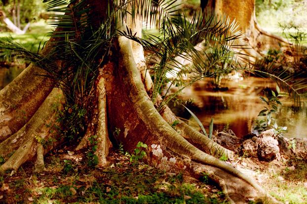 Jungle 04
