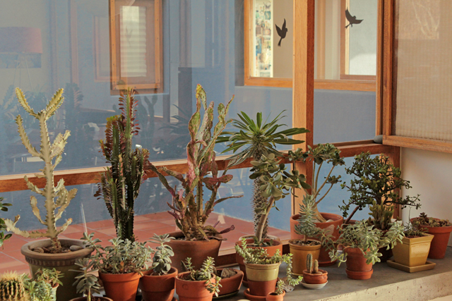 Window plants