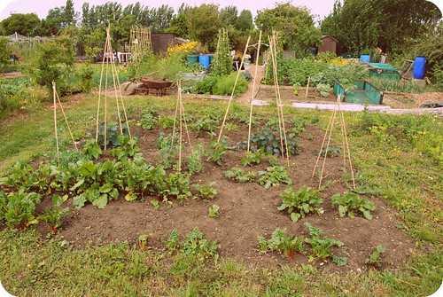 allotmenting ::