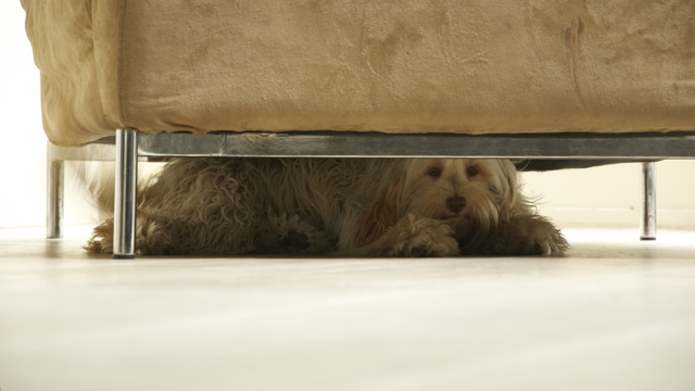 bella under the chair MQ