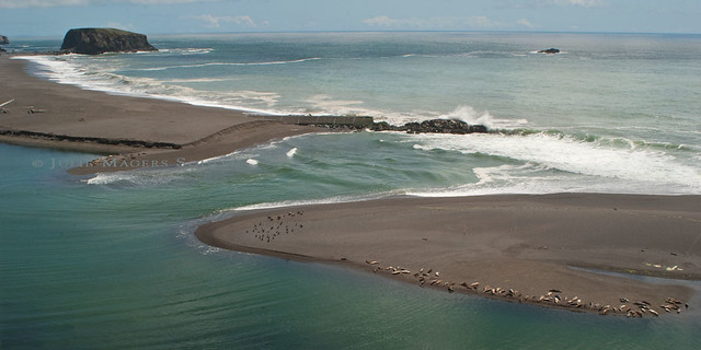 The confluence of the Russian River and Pacific Ocean is teeming with wild sea lions and birds.