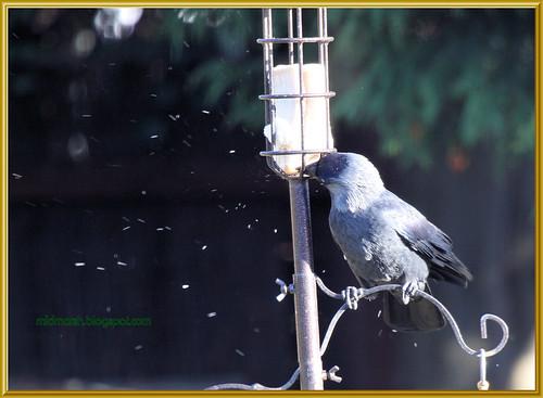 Raining Breadcrumbs