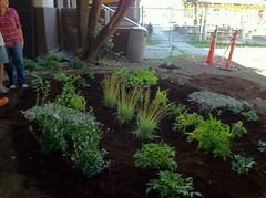 Completed Rain Garden