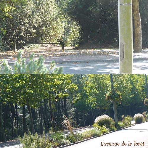 Avenue de la Forêt