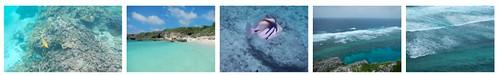 Nikon AW100 sample photos and videos