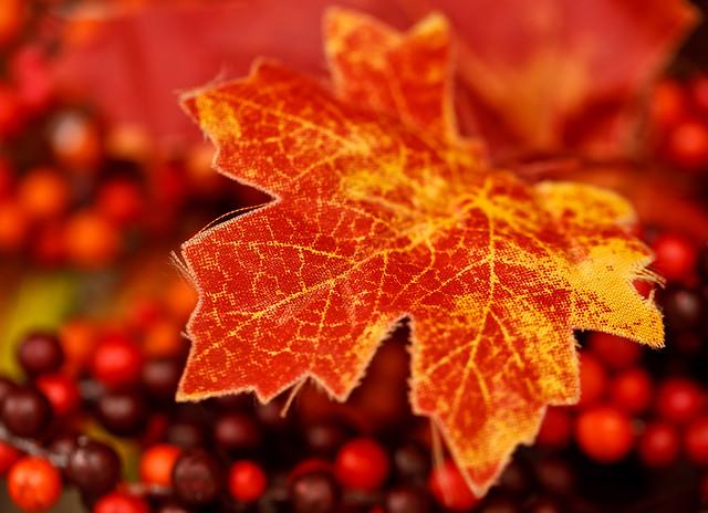 281/365 - October 8, 2011 - Peak Color