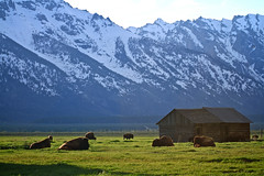 Teton Evening (SomewhereOutside) Tags: summer rainbow buffalo jackson sage wyoming grandtetons tetons bison mountainscenes somewhereoutside douglasmccartney