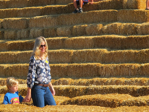walking the hay maze