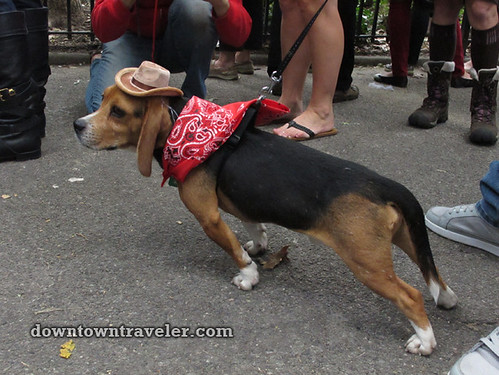Tompkins Park Halloween Dog Parade_Beagle in cowboy costume
