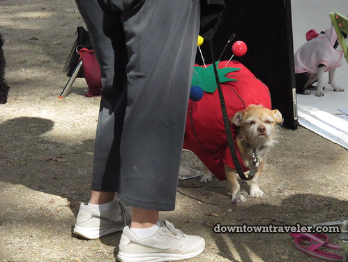 Tompkins Park Halloween Dog Parade_Pin cushion costume