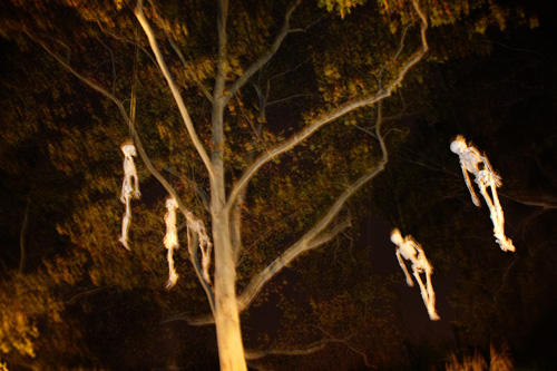 tree-skeletons