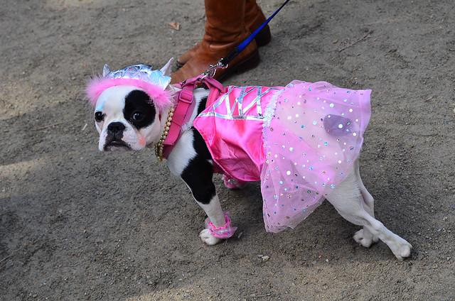 Halloween Dog Parade-32