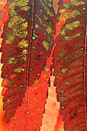 Stained glass sumac 2 by pdecell