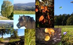 Odenwald Landscape (ivlys) Tags: autumn collage germany deutschland walk herbst landschaft spaziergang odenwald ivlys