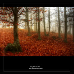 Como manto de hojas cadas (Julio_Castro) Tags: trees mountain field leaves fog hojas nikon arboles bosque campo otoo montaa niebla castaar nikond200 castaardeltiemblo oltusfotos