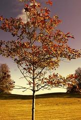 vivid tree (petr19710) Tags: flowers kilkenny ireland nature landscape flickr sony tokina alpha callan mountjuliet a700 framedlife petrpetr