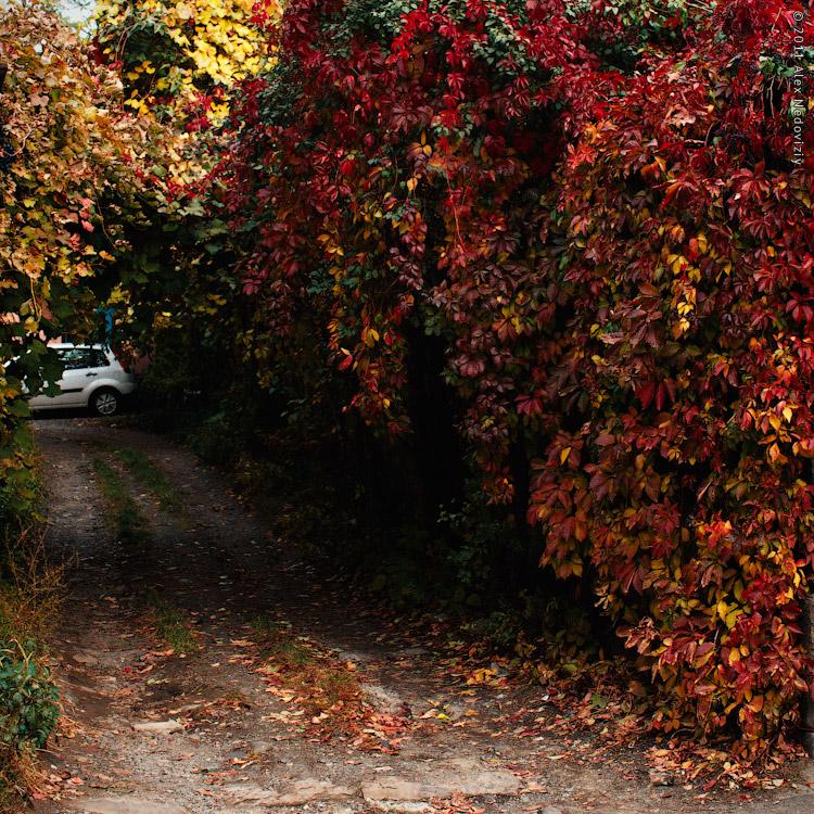 Квадратик осеннего Ужгорода © 2011 Alex Nedoviziy