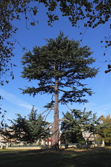 Majestic Tree (Jay Tilston) Tags: tree pine tall