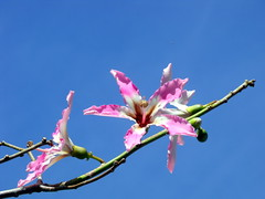 no leaves, only flowers (dmixo6) Tags: spain andalucia dugg dmixo6