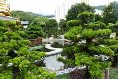 Nan Lian Garden HK (Toby Garden) Tags: pink red hk white pine garden pond waterlily purple buddhist hill chinese diamond hong kong zen bonsai kowloon nan lian a