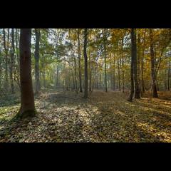 Herbst... und das hrt man (maxelmann) Tags: autumn germany laub herbst wald bume autumnal sachsenanhalt maxelmann rascheln ktschlitz
