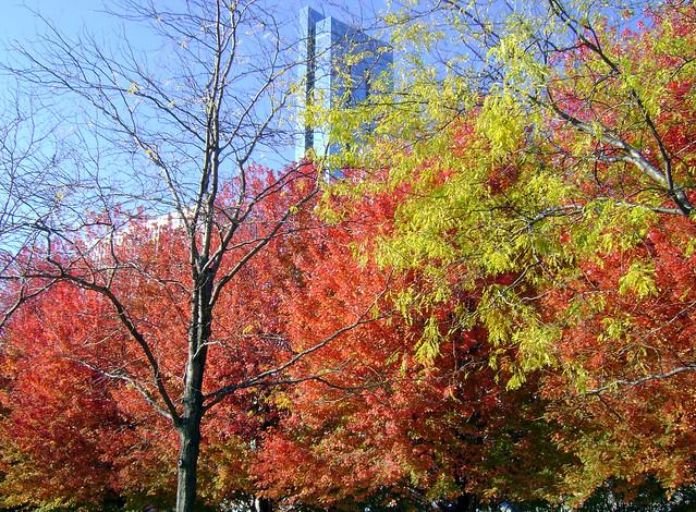Chicago: cores de outono