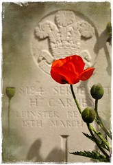 Remember them ..... (*Lie ... on a short break ... !) Tags: memorial belgium ieper westvlaanderen poppy remembrance klaproos coquelicot ypres flanders flandres gedenken mohn warcemetery soldatenfriedhof herdenking flandern thegreatwar woi oorlogskerkhof soldatenkerkhof commmorer degrootenoorlog cimetiredeguerre evenstilstaanbijdegraven daarterplekkewaarallesplaatsvond onvoorstelbaarhoejejedanvoelt