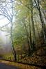 Nebbia autunnale (Andrea Rapisarda) Tags: wood italy mist fall nature colors fog foglie nikon italia ngc foggy natura sicily nebbia autunno sicilia nationalgeographic bosco ©allrightsreserved parcodeinebrodi d7000 andrearapisarda andrearapisardaphotography