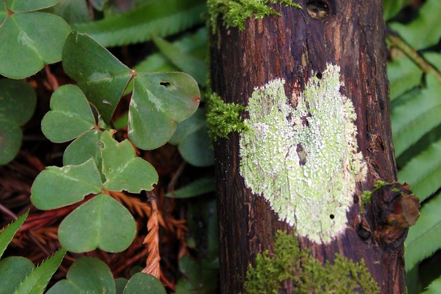 If a heart falls in the forest, does it mean it's made of lichen?
