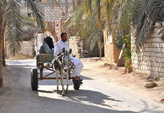 DSC_0847 (gill_penney) Tags: desert egypt donkey palmtrees oasis carts sanddunes siwa