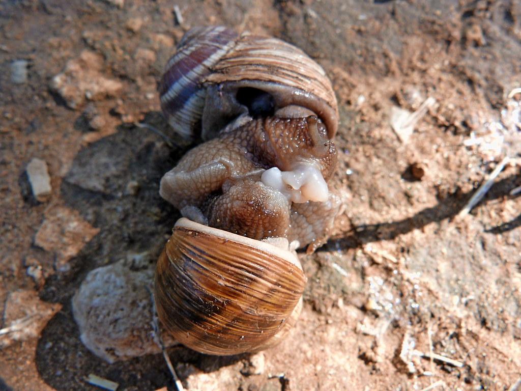 05-11-2011-snails-wasisdas5