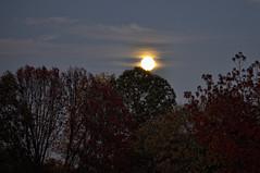 Moonrise (Greg Foster Photography) Tags: autumn sky moon fall silhouette night clouds georgia luna fullmoon moonrise