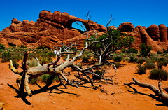 Road trip to Utah (Ishrona) Tags: travel autumn mountain landscape landscapes utah nikon desert places moab