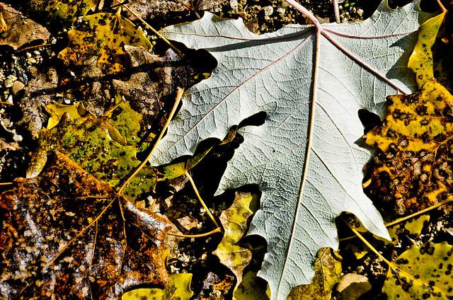 otoño 15