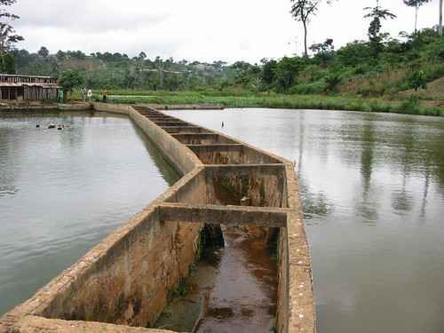 Aquaculture, Cameroon. Photo by Randall Brummett, 2001