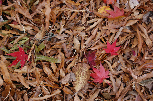 Nov11-leaf fall_600