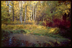 A pond (Max Aleshin) Tags: autumn fall film fuji kodak e100vs reversal gsw690iii