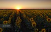 When you do something noble and beautiful and no one would notice, do not be sad. Because the sun every morning is a beautiful spectacle, and yet most of the audience is still sleeping (Rui Almeida Photography) Tags: sunset wallpaper sunlight portugal nature sunrise landscape dawn freedom background sunflowers santarém sunflower portfolio hdr girasole tournesol girasol foreground sonnenblume ribatejo valada girassois cartaxo solsikke sunflowerfield loveliness regendo الشمس sunflares عباد ηλιοτρόπιο соняшник portodemuge подсолнечник portugalmagico mygearandme mygearandmepremium mygearandmebronze mygearandmesilver mygearandmegold musictomyeyeslevel1 aboveandbeyondlevel1 mindblowinglandscapes