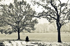 memory of the Fall (twothousandeleven) (paradiso76) Tags: park autumn trees light newyork fall girl blackwhite nikon sitting centralpark meadow thinking sheepmeadow d90 blackwhitephotos sfidainfinita