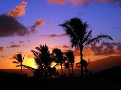 Sunset And Silhouetted Palm Trees; Maui, Hawaii (hogophotoNY) Tags: sunset silhouette digital island hawaii us unitedstates maui palm palmtrees palmtree mauisunset hogo sunsetmaui hogophoto hogophotony sunsetandsilhouettedpalmtreesmaui