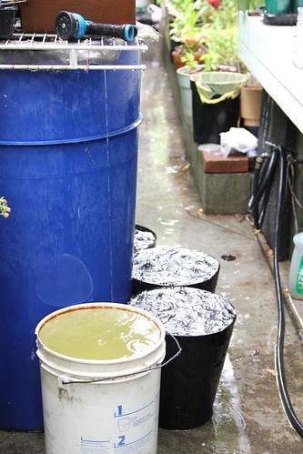 Overflowing Rain Barrel