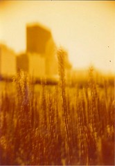 Redscale 5 001 (heath.iverson) Tags: redscale5