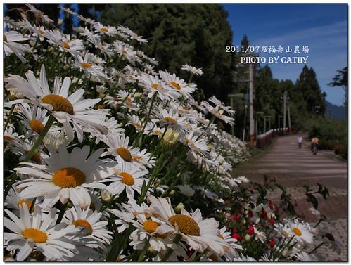 福壽山農場-13