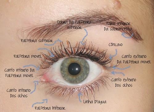 Conhecendo seu olho! by Maria Clara Almeida!