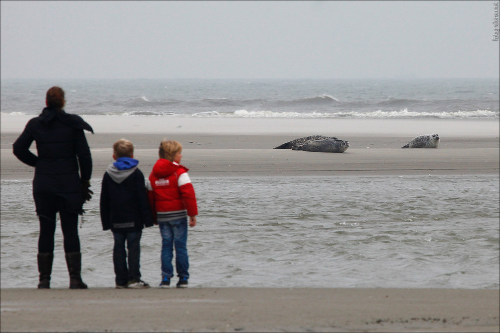 Watching seals (Schiermonnikoog)